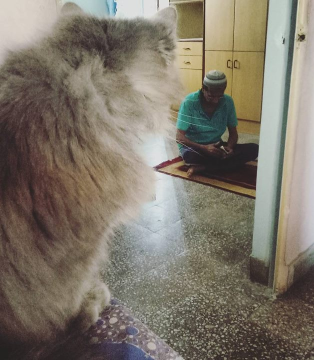 Everything that i love about where I live is in this one frame.   #father #islam #catsofinstagram