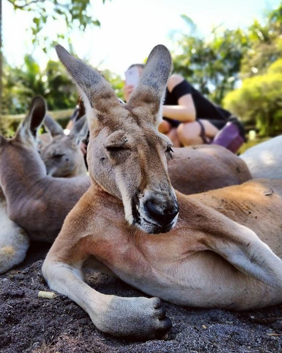 How i look at my newsfeed every morning. #tb #perth #kangaroos #oneplus5t