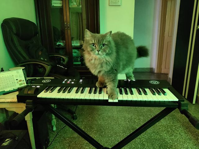 And that's how you play with the keys hooman. If you don't know cats, they are all about jumping and climbing at places you don't want them to😅